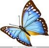 蝴蝶图.rar